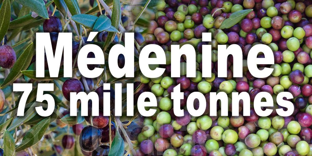 Augmentation de 30% de la récolte des olives à Médenine