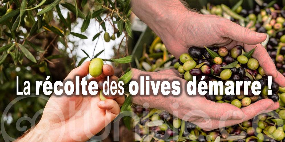 Nabeul : La récolte des olives estimée à 36 mille tonnes