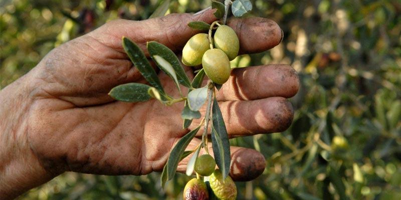 olives-010218-1.jpg