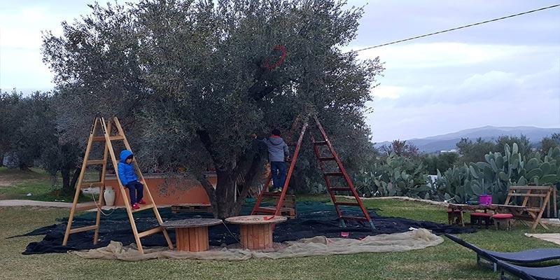 olives-121217-1.jpg