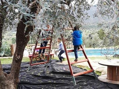 Vivez l'ambiance de la cueillette des olives chez ces fermes à Mornag