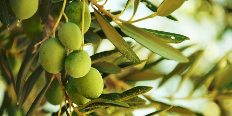 olives-260917-1.jpg