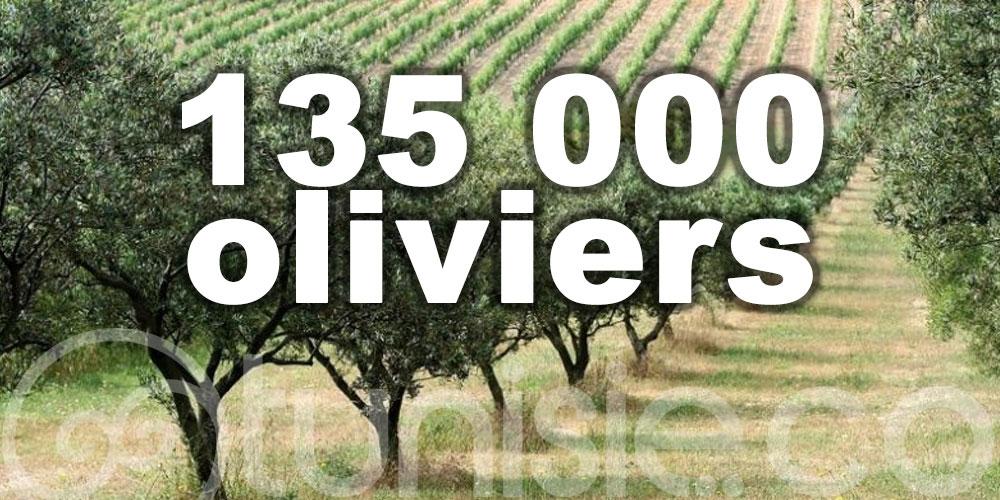 Une nouvelle oliveraie verra le jour à Remada