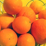 Démarrage des exportations des Oranges Maltaises