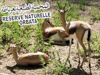 2,2 millions de dinars pour la préservation de la réserve naturelle d'Orbata à Gafsa
