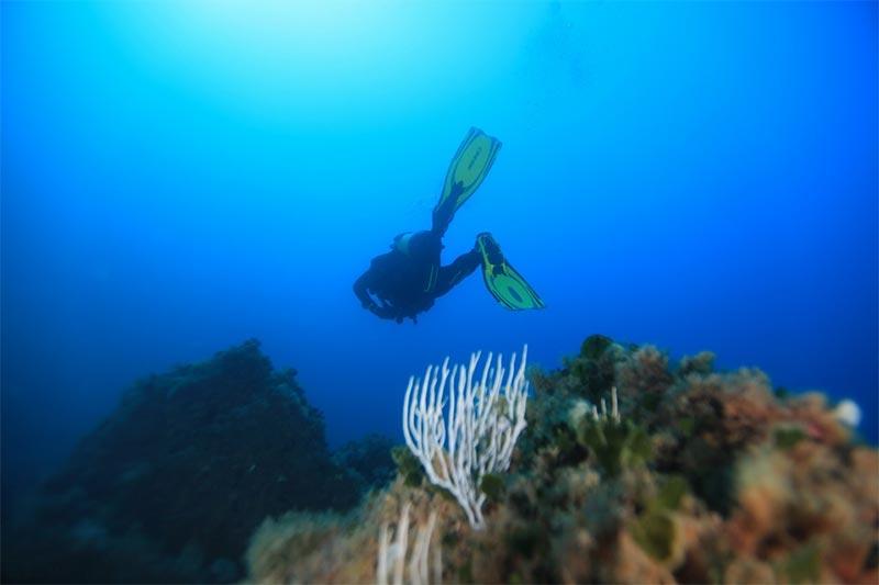 plongee-220318-10.jpg