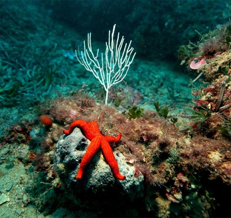 plongee-220318-8.jpg