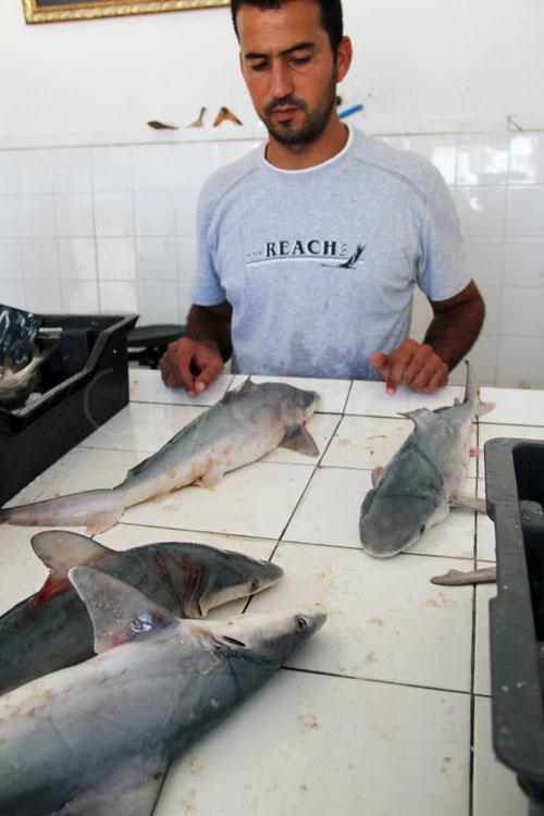 Noms des poissons en Arabe et en Français