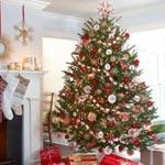 Où acheter votre Sapin de Noël, adresses et prix