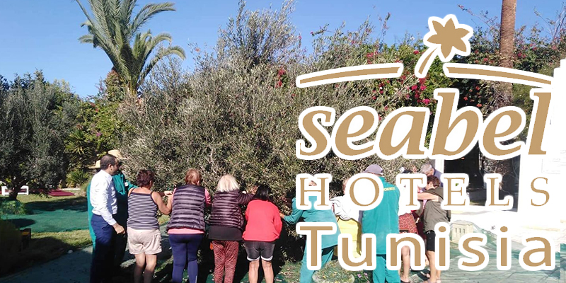 En vidéo : Vivez l'ambiance de la cueillette des olives au Seabel Hotels