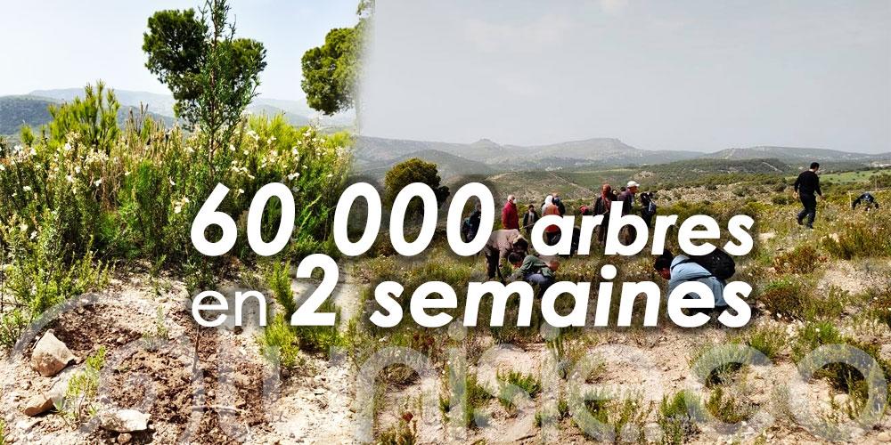 A Siliana, les associations Soli & Green et Tounes Clean-Up plantent 60 000 arbres en 2 semaines