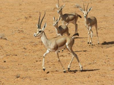 En photos : Découvrez le parc national de Sidi Toui, un havre de paix et de plénitude à Médenine