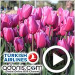En vidéos : Turkish Airlines célèbre la Tulipe et invite les agences tunisiennes