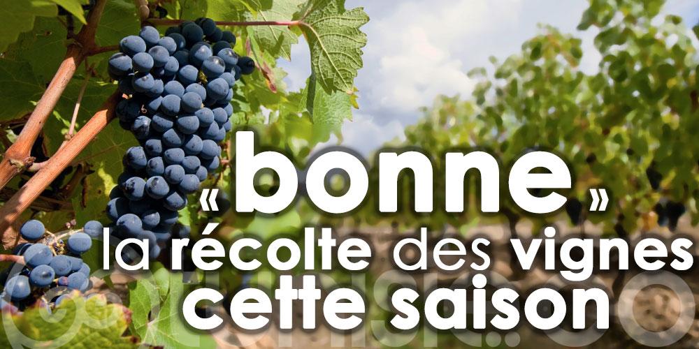 Nabeul : La production viticole en hausse cette saison