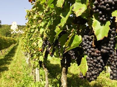 'La route des vins Iter Vitis Magon' le nouvel itinéraire culturel et touristique entre la Tunisie et l'Italie