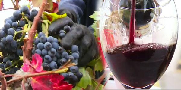 vin-3110116-1.jpg