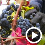 En vidéo : Le vin futur atout touristique pour la Tunisie ?