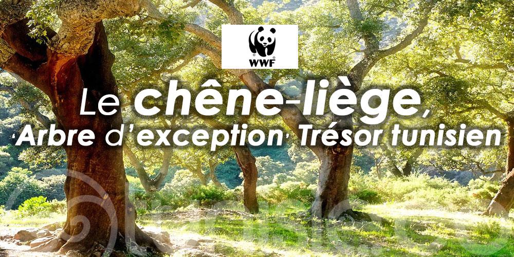 WWF Afrique du Nord : Démarrage du projet People & Cork visant la valorisation du chêne-liège