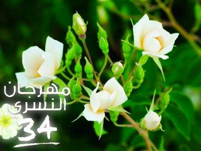 La 34ème édition du Festival Ennesri de Zaghouan du 6 au 13 Mai