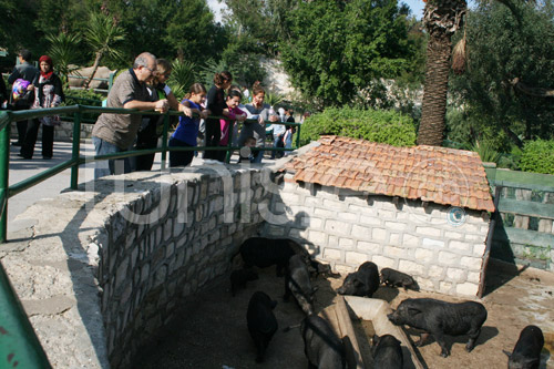 zoo-161111-13.jpg