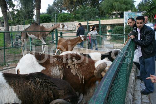 zoo-161111-14.jpg