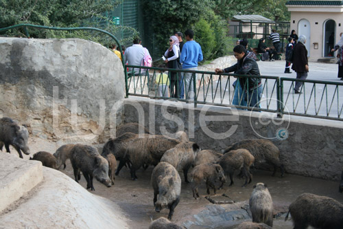 zoo-161111-16.jpg