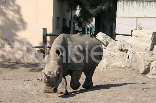 zoo-161111-18.jpg