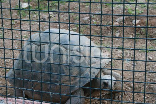 zoo-161111-19.jpg