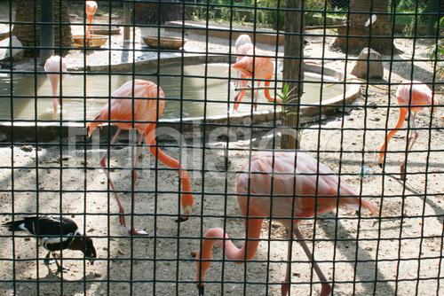 zoo-161111-4.jpg