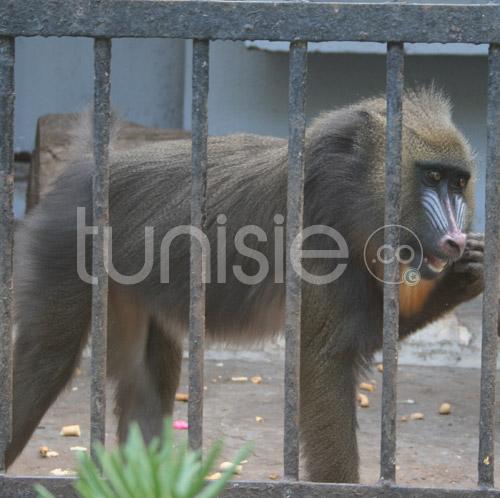 zoo-161111-5.jpg