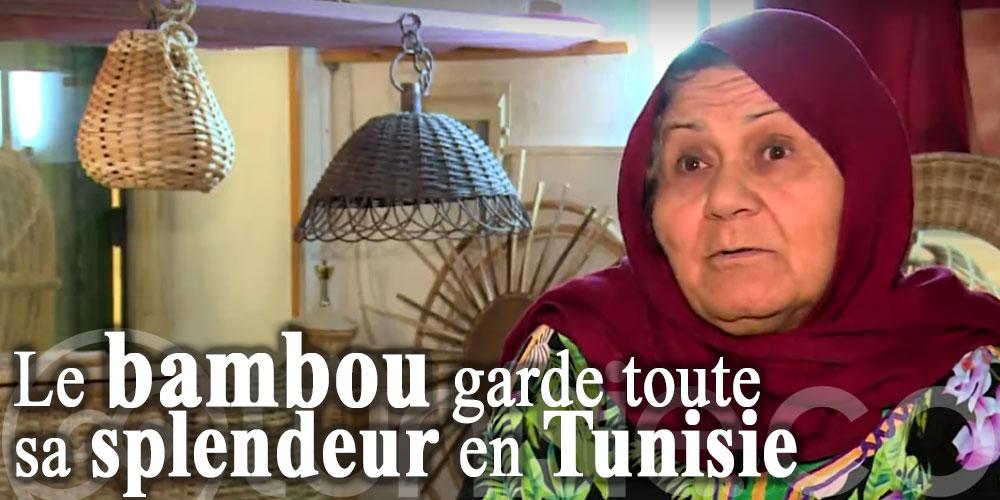En vidéo: Le bambou garde toute sa splendeur en Tunisie