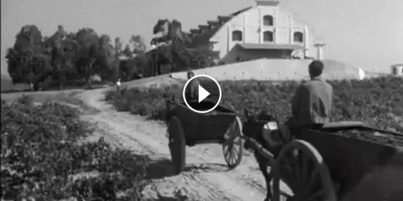 En vidéo : Un documentaire rare de l'époque où la Tunisie exportait son blé