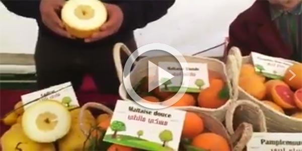 En vidéo : Mr Nabil Elasmi présente les variétés d'agrumes Hammametoises au Festival des Agrumes