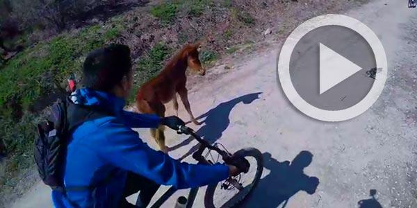 En vidéo : Quand les Mountain Bikers traversent le Parc Ennahli